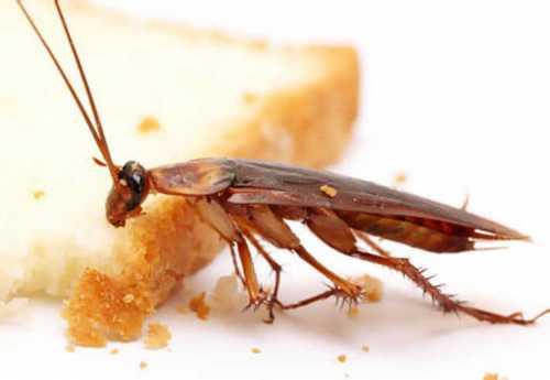 тараканы в голове: как с ними бороться